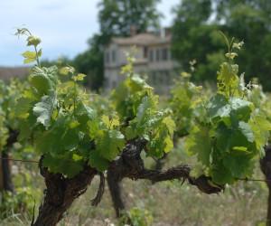 Reben und Weingut