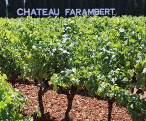 Château Farambert Reben