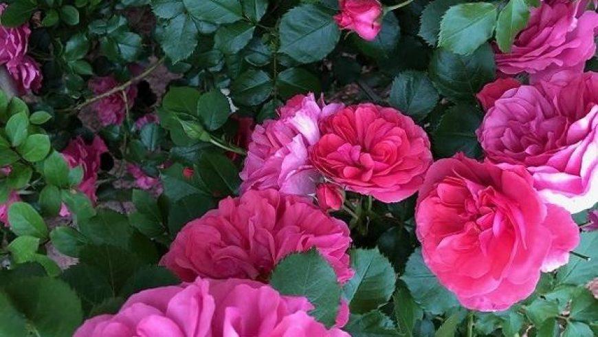La Vie en Rosé 2019