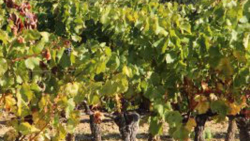 Rhône-Paket Weinwirtschaft