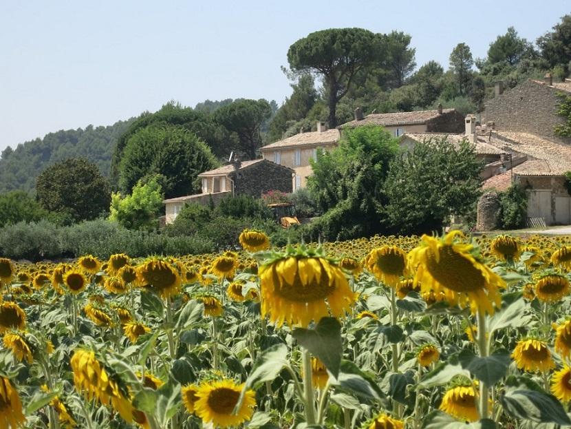 Provence-Reise Probierpaket im Angebot