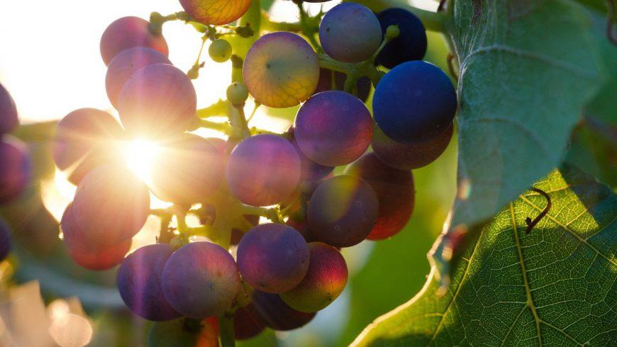 Provence Wein Abo-Paket