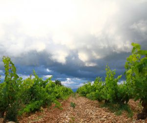 Mont-thabor-vigne-7_2
