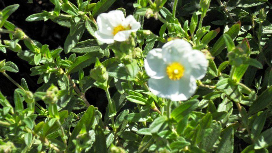 Frühling in der Provence