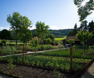 Potager, Louise Benech, Chateau La Coste, France 2
